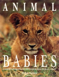 Image for Animal Babies: A Habitat-By-Habitat Guide to How Wild Animals Grow